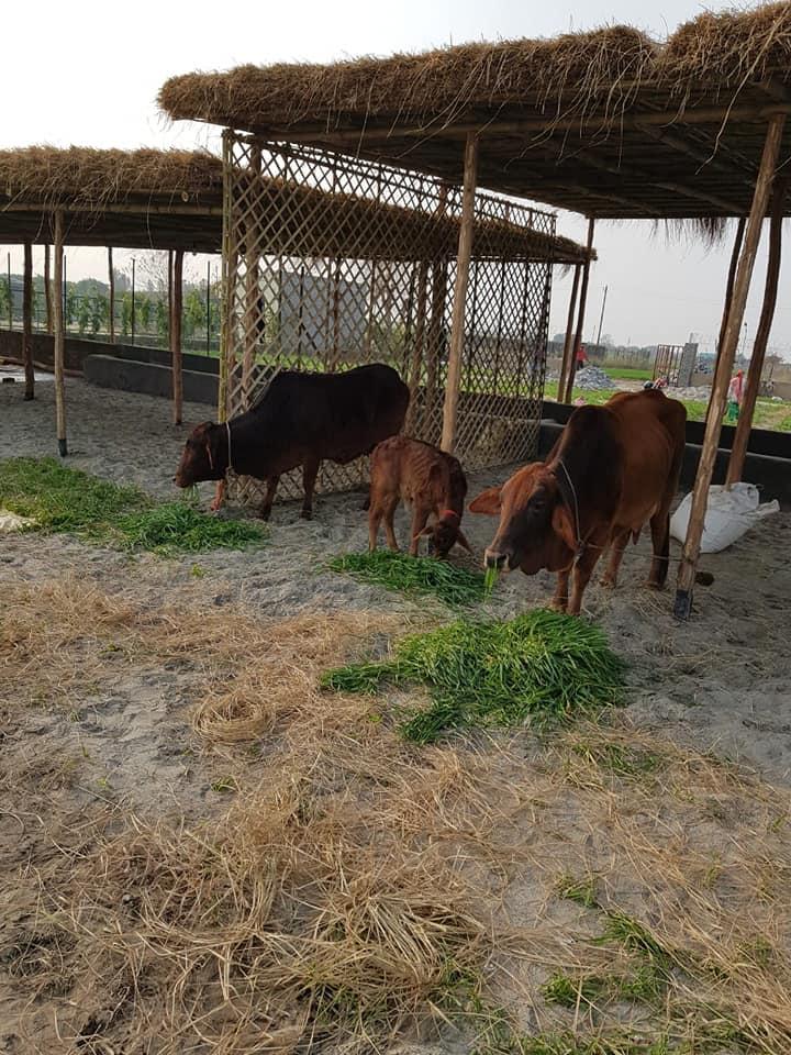 Shri Krishna Gaushala | Animal Welfare | Janswabhiman
